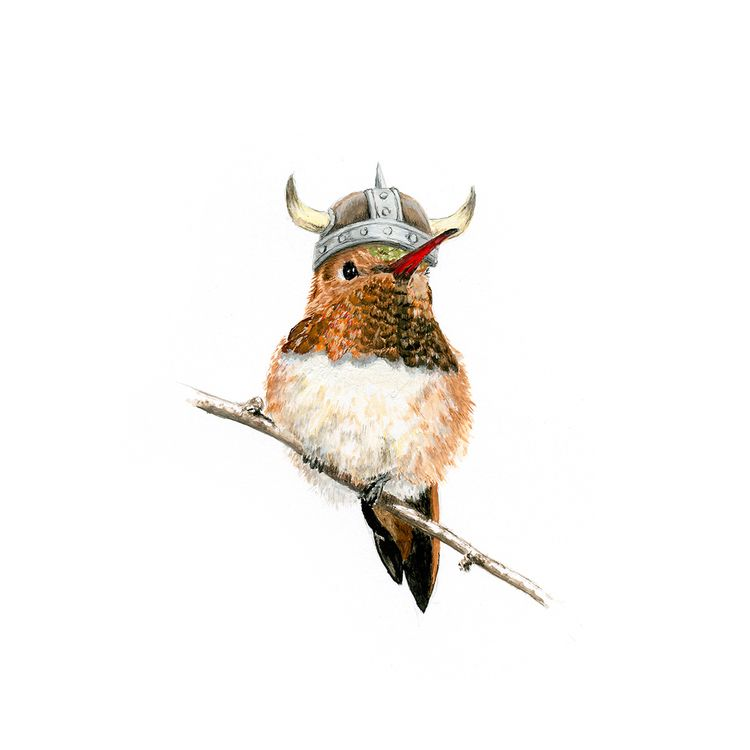 Eric Red, rufous hummingbird. G - bschelling | ello