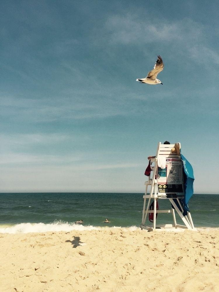 beach, ocean, oceancity, seagull - mjs80 | ello