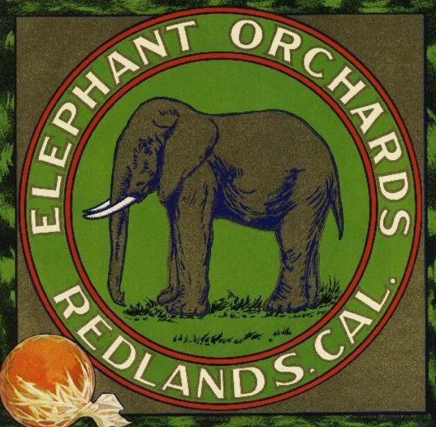 Elephant Orchards Redlands - broodingsquid | ello