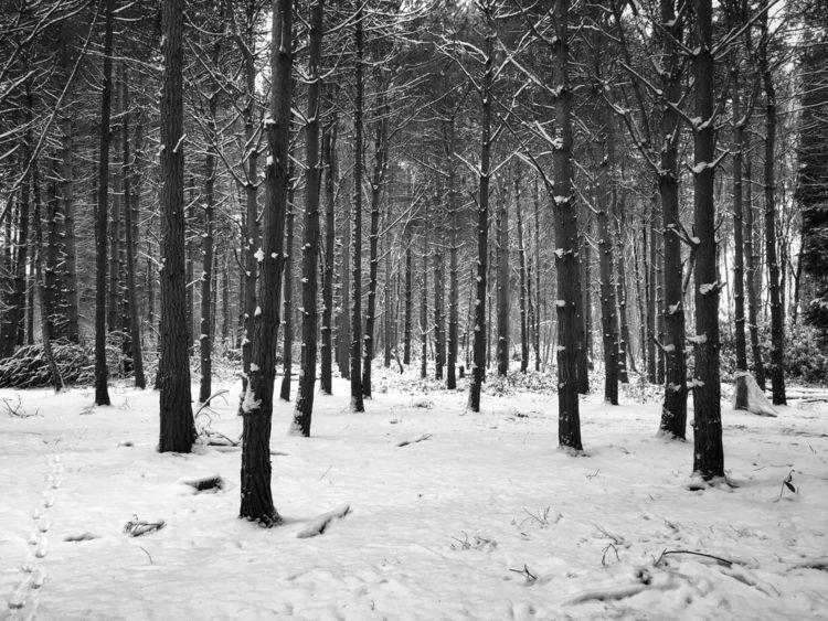 Winter Wonderland - lisarmitchellphotography | ello