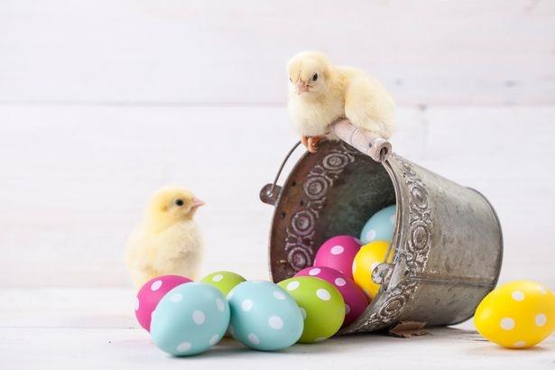 Easter Voucher Codes - topvoucherscode | ello