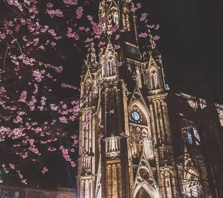 cathedral, night, flowers, dark - oscx | ello