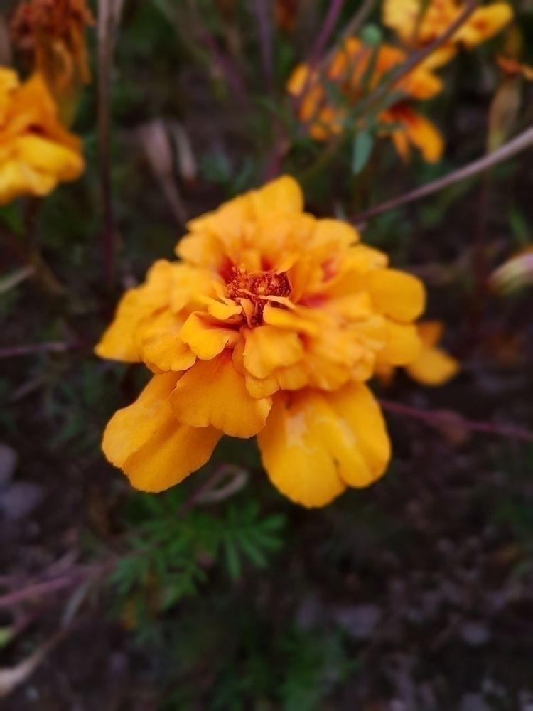 flores, flowers, yellow - melvinozzy   ello