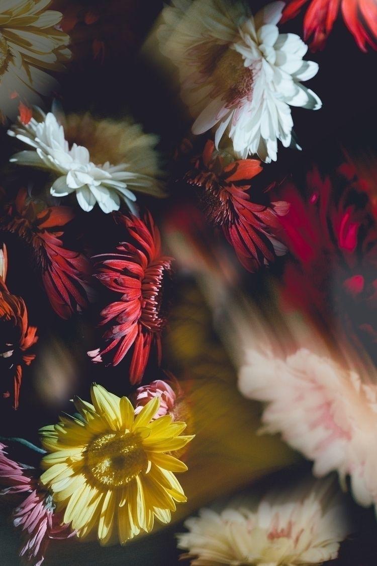 flowers, art, yellow, red, photography - ehensleyart | ello