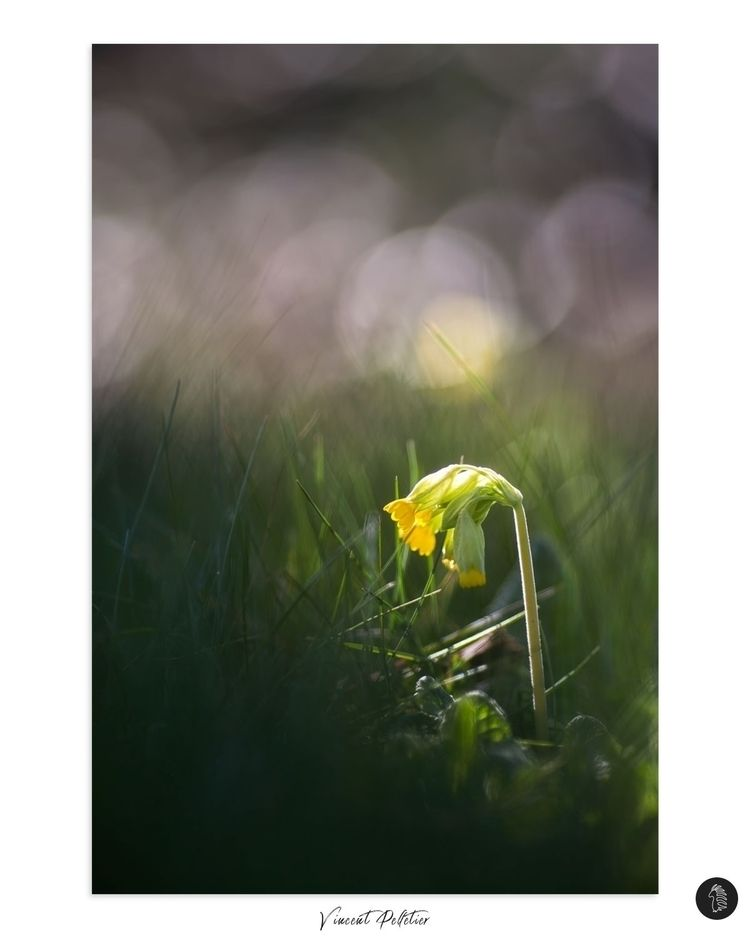 Dream Spring - photographer, photography - funkyporcupine | ello