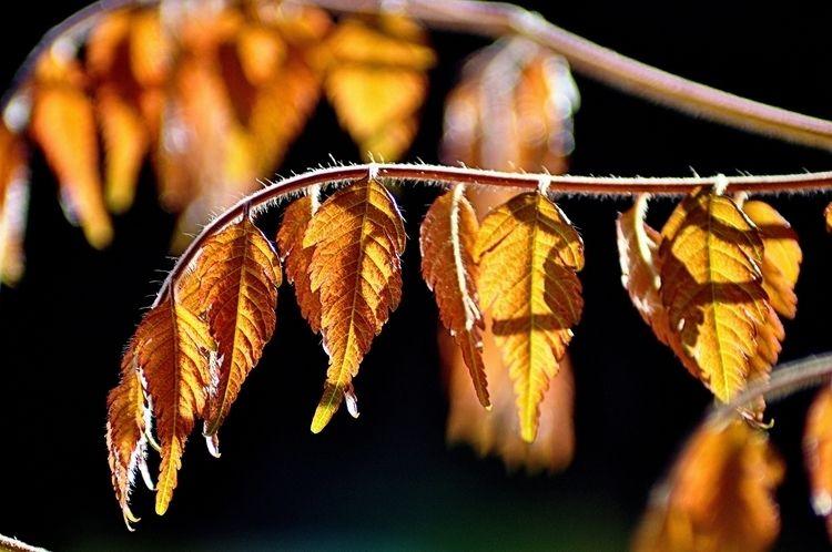 Outonal - outono, autumn, leaves - jsuassuna | ello