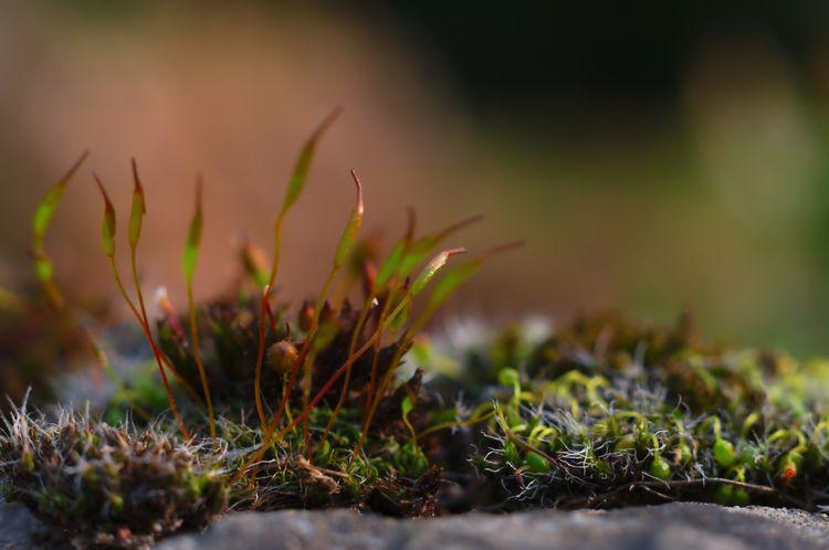 nature, green, moss, mossy, closeup - lendote | ello