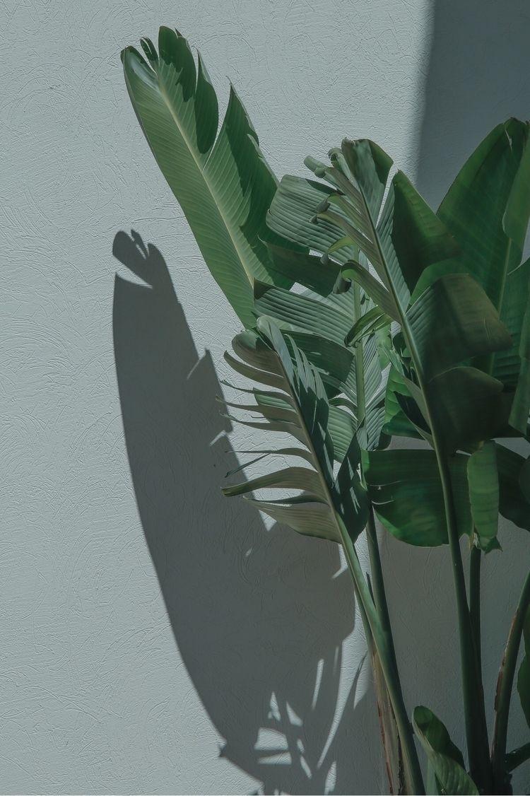 plant, shadow, summer#simplicity - jokalinowski_ | ello