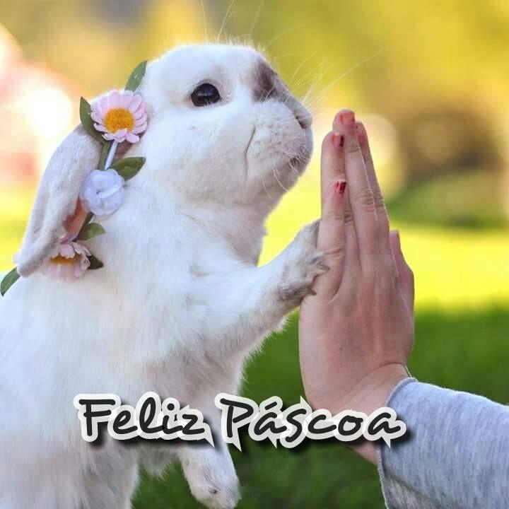 Feliz Páscoa! Tempo de renovaçã - prissillaaudrey | ello