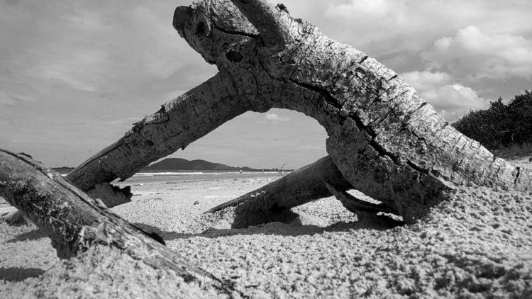 Restinga Morta Praia de Itapoá  - jsuassuna | ello