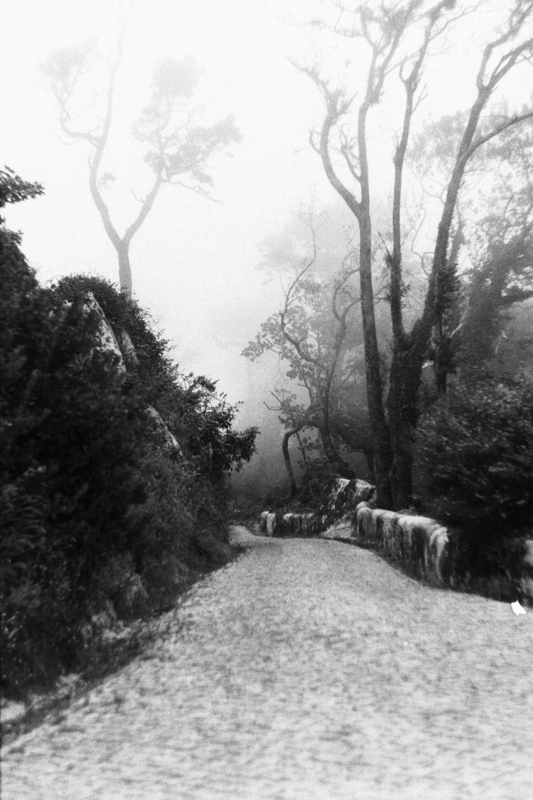 Sintra, Portugal - analog, film - tatao | ello