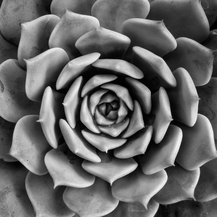 Succulent Series 2 - 9, abstract - chrishuddleston | ello