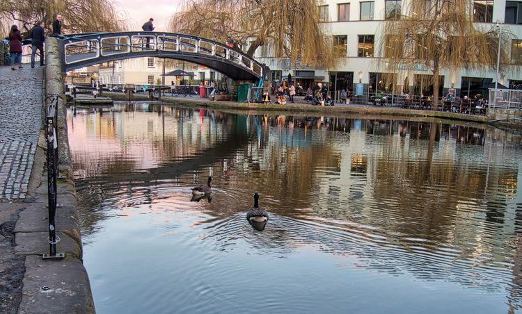 Geese - resident geese swim Vic - neilhoward | ello