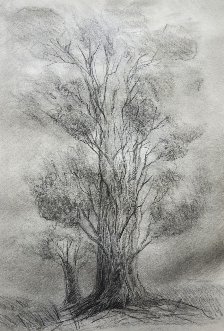 Trees studies Graphite /Waterco - euric | ello