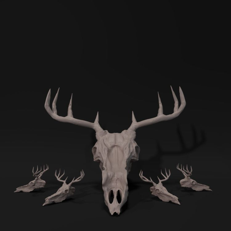 Deer Skull Model Sheet - daily, everyday - malcolmcrowther | ello