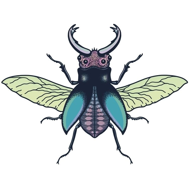illustration, art, drawing, insect - alicecquaglia | ello