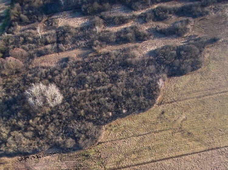 grove ash trees (Fraxinus), flo - kap_jasa | ello