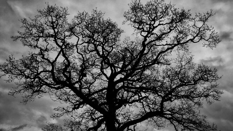 Silhouette - tree, nature, silhouette - davidhawkinsweeks | ello