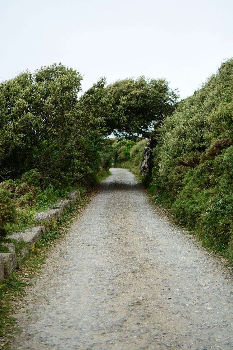 Cornwall, England - heather, coast - brendontjg   ello