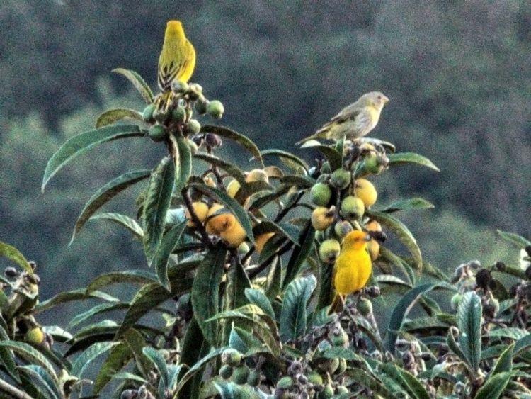 Pássaros em seu habitat - nature - _erick_ | ello