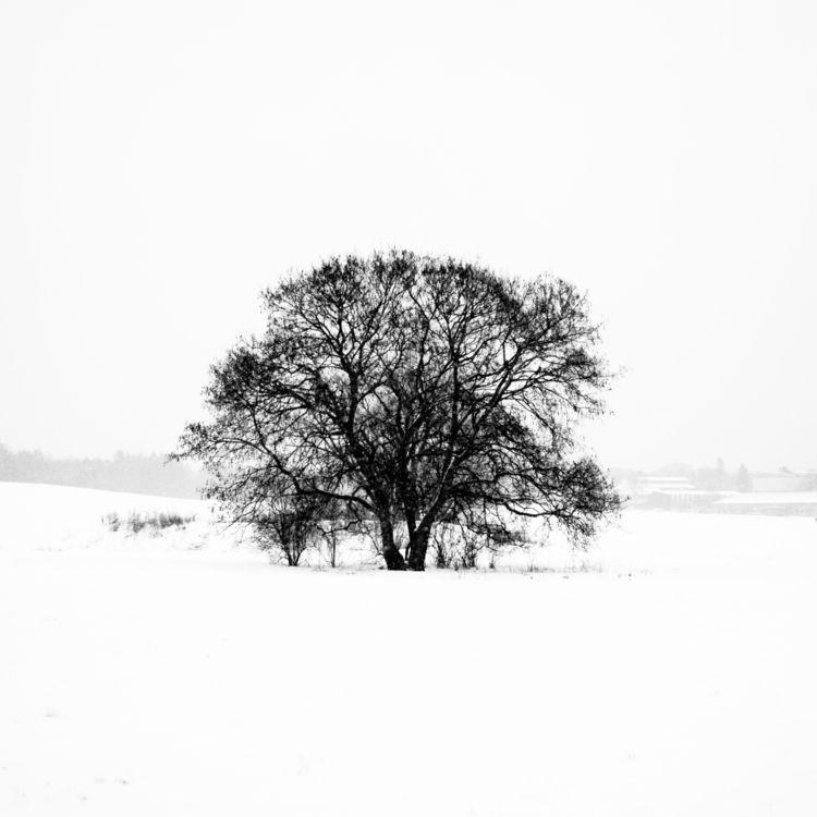 generation life, dies spring - leica - ahlstrom | ello