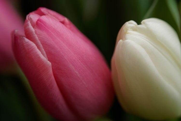 Speise Lips - photography, plant - marcushammerschmitt | ello