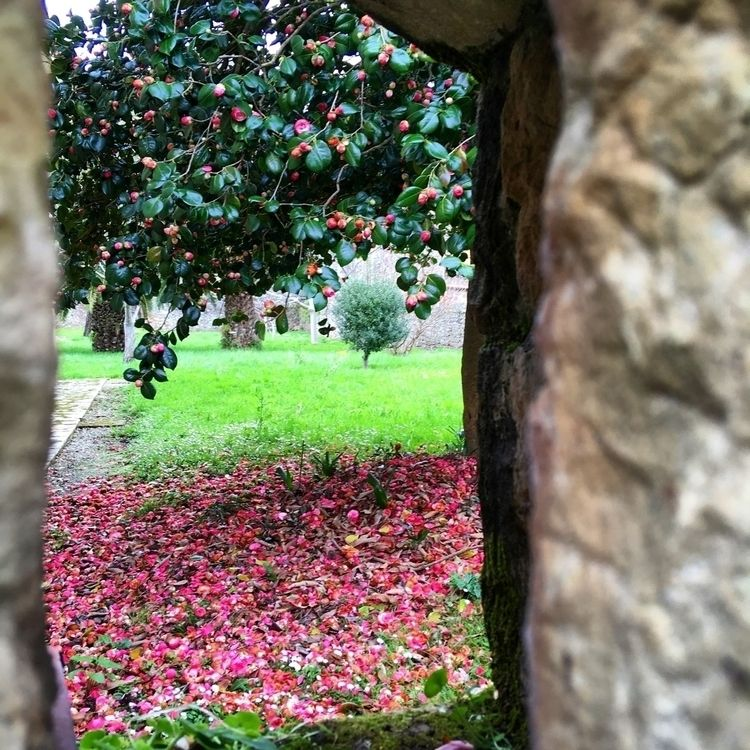 secret garden - Lierganes, flowers - antoniofse   ello