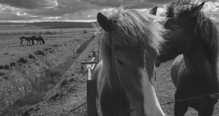 Prevailing Winds Icelandic poni - benroffelsen | ello