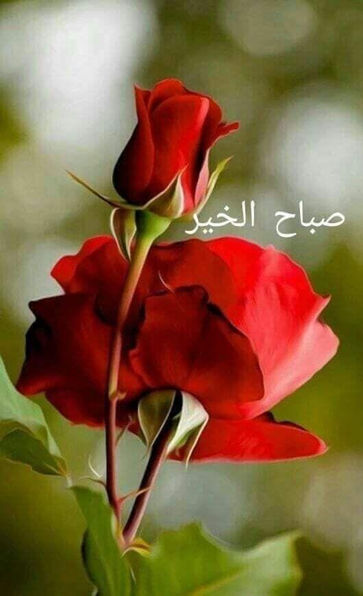 Good morning Egypt - hatemiup | ello