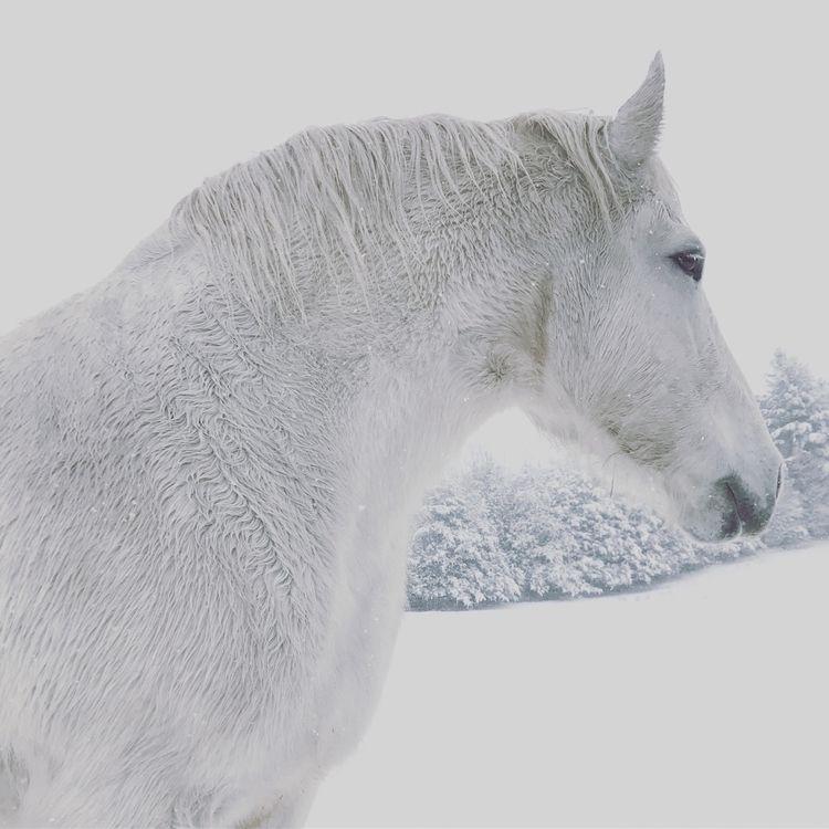 mothers huge! Annabelle - horses - tsiah | ello