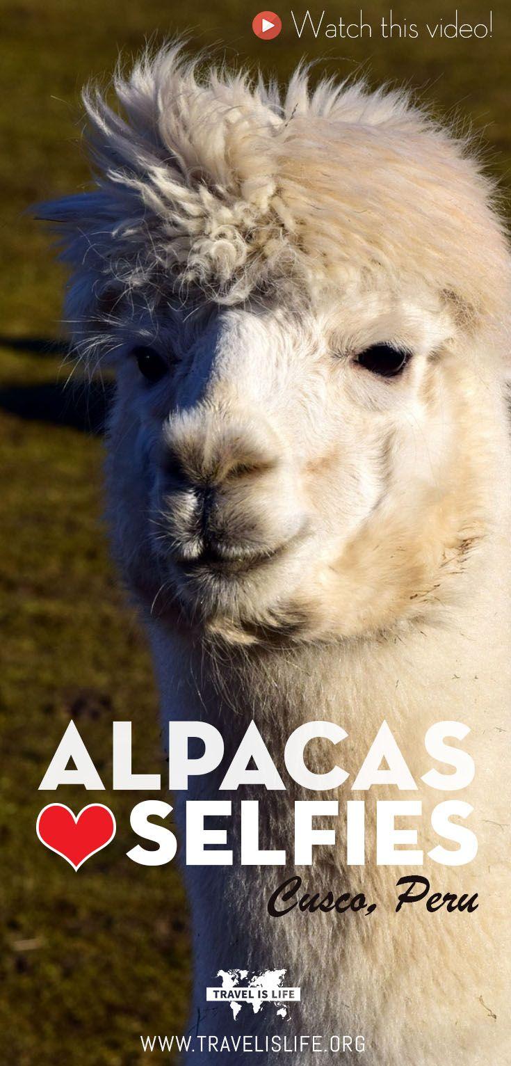 Join Kris Cusco Peru held alpac - travelislifeorg   ello