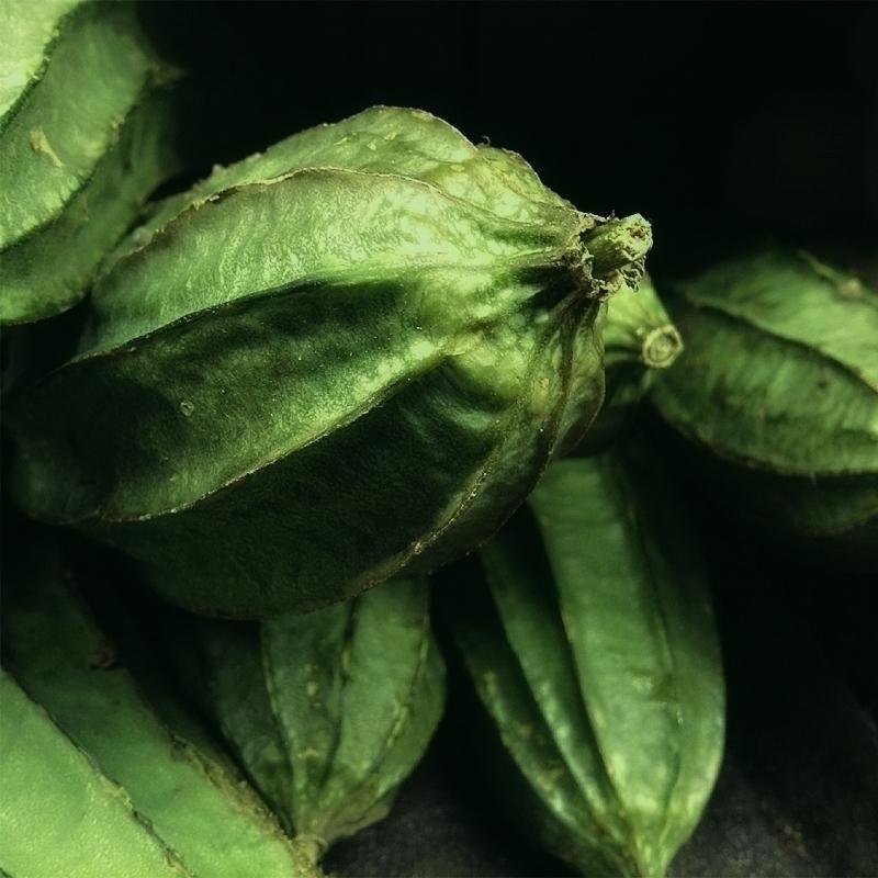 Eat Greens. Sin qua (Luffa acut - dispel | ello