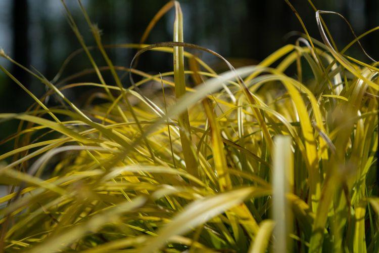 Leaves Grass leaf grass journey - jtmphoto | ello