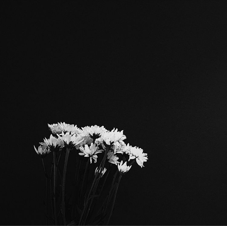 Moody flowers - photography, bnw - hoornvlies | ello