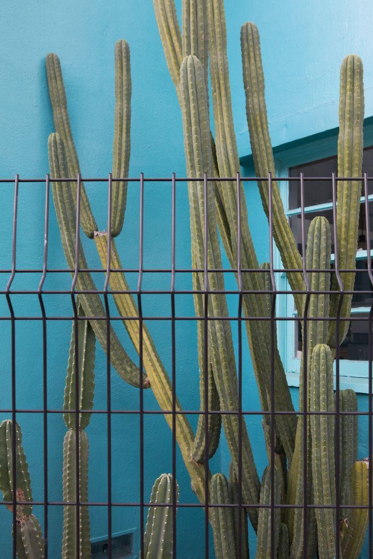 Succulent, Blue Courtyard, Silv - odouglas | ello
