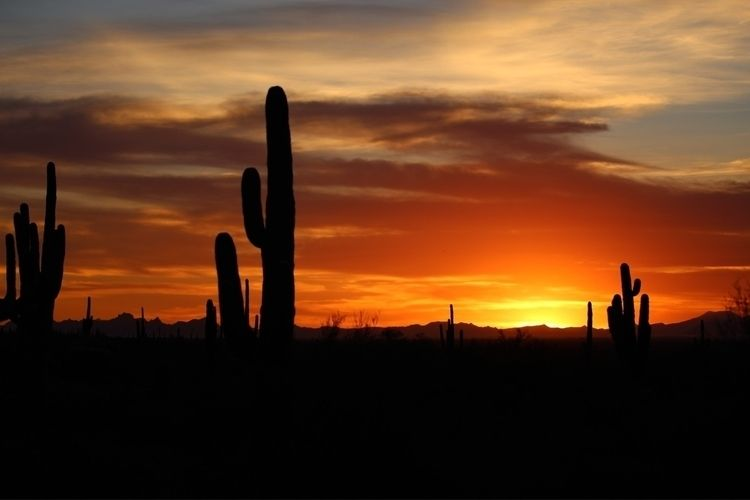 arizona_sunsets, desert_sunsets - bamps   ello