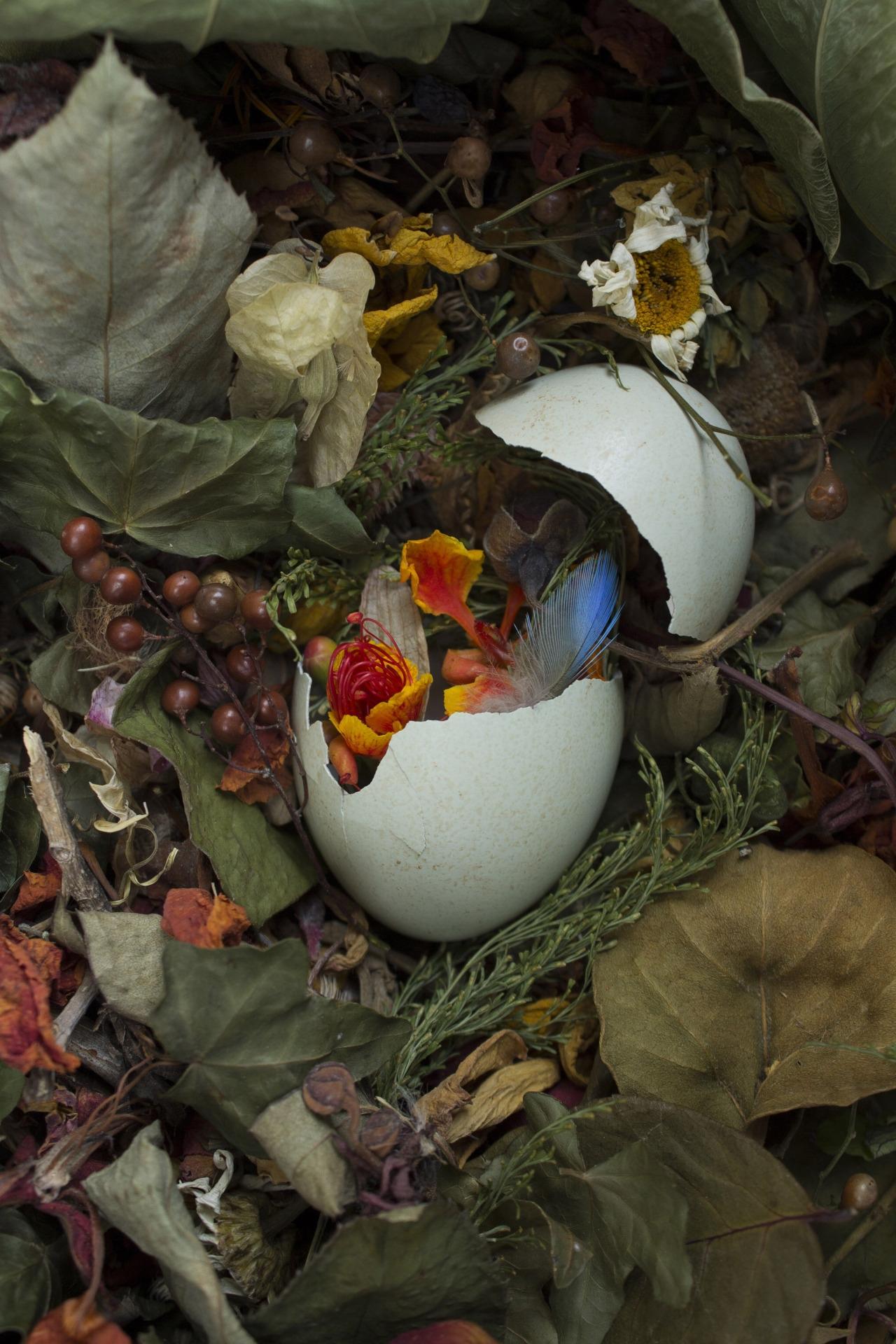 Bluebird - egg, stilllife, flower - franalvez | ello