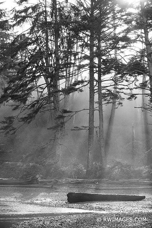 COASTAL FOREST OLYMPIC NATIONAL - robert-wojtowicz-photography | ello