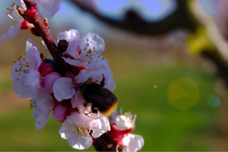 Der Frühling darf ruhig weiter  - brainiyak | ello