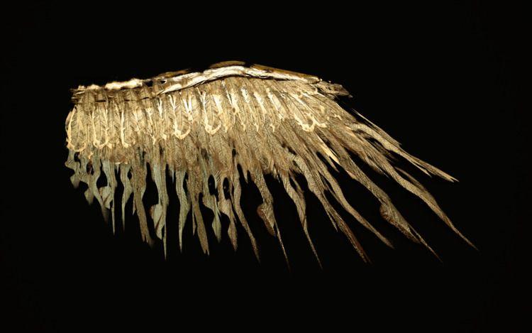 Flight Destiny Wings birds; min - z3rogravity | ello