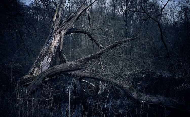 Dead Tree - nature, naturephotography - klausheeskens | ello