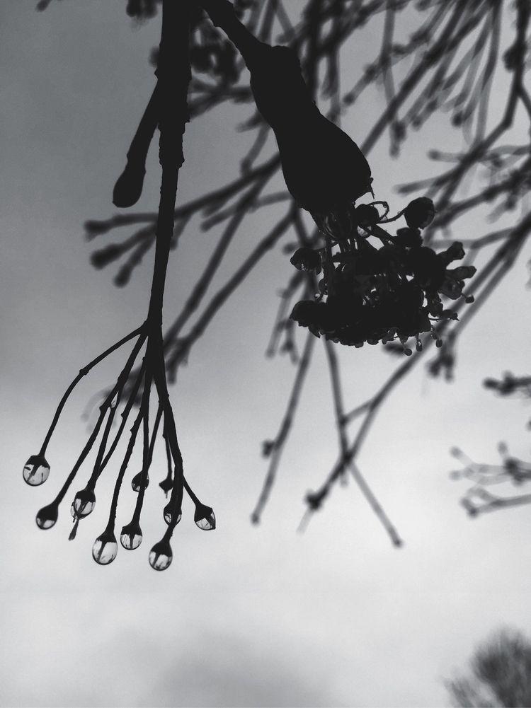 BNW Rain - ellophotography, blackandwhite - lali_olivia | ello