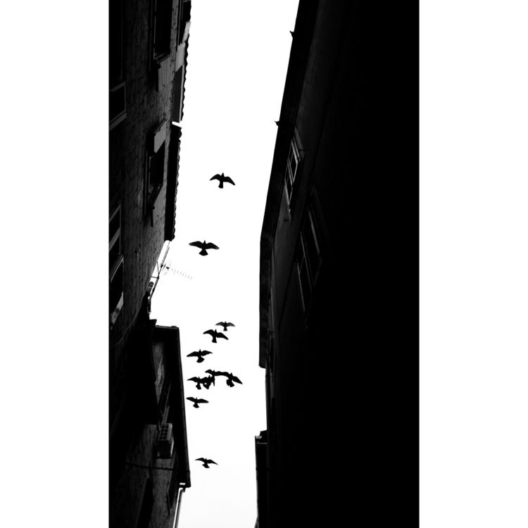 birds, flying, bnw, sky, burning - mmodic | ello