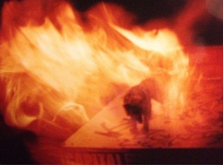 Fire wolf... atop filing cabine - mctrillion | ello