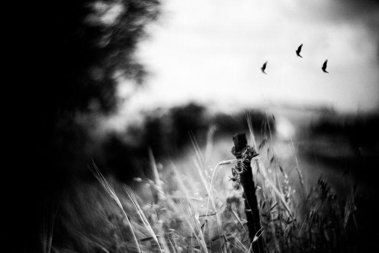 Flight - photography, monochrom - elhanans | ello