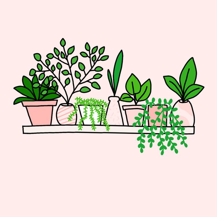 Day 21 - 30daysofplants, illustration - ashleighgreen | ello