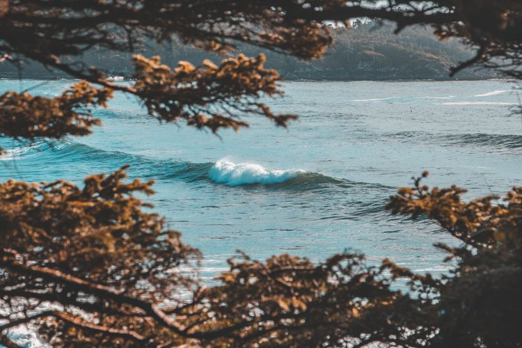 Tofino, Ocean, BCphotograpy, Naturephotography - samcondy   ello