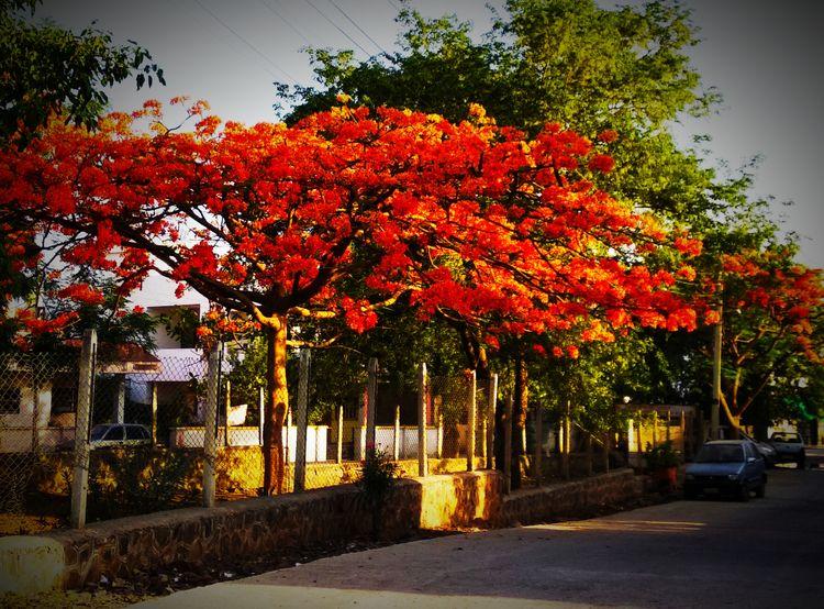 India, Red, Flower, atulbw - atulbw | ello