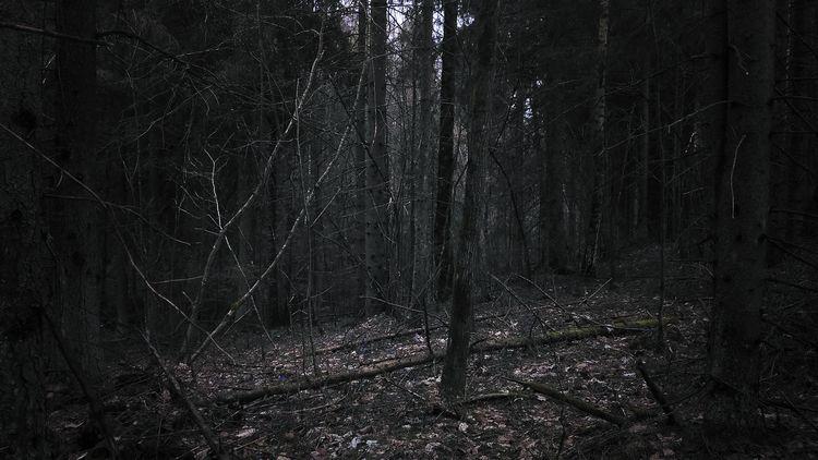 forest, lithuania, april, mothernature - beheroght   ello