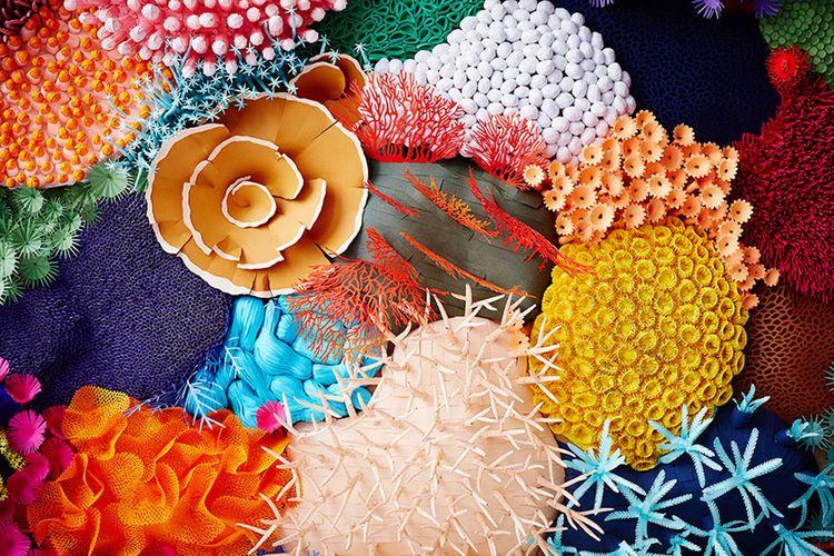 Colorful Complexity Coral Reefs - scene360 | ello